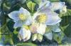 Il mio  fior d´angelo, Min schersmin (ängelns blomma)
