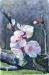 L´albicocco in fiore, Aprikosträdsblommor